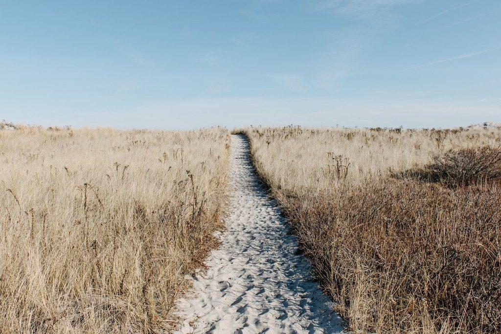prairie, path, field-1246633.jpg